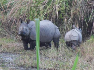 Bardia National Park Tour